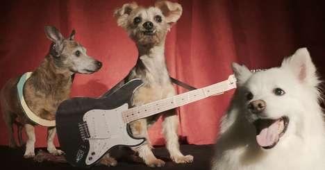 Senior Pet Adoption Pageants