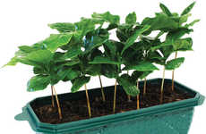 Coffee-Growing Kits - This Kit Makes It Possible to Grow Coffee Plants at Home