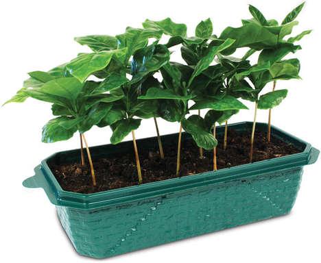 Coffee-Growing Kits