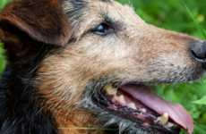 Life-Extending Dog Medicines - The Chemical Called Rapamycin Can Increase a Pet's Life Expectancy