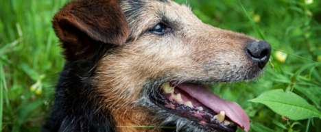 Life-Extending Dog Medicines