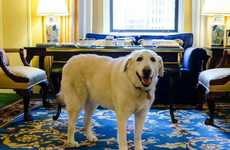 Luxury Hotel Canine Concierges - The Fairmont Hotel Chain Has a Series of Canine Ambassadors