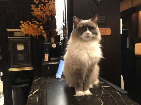 Feline Luxury Hotel Mascots - The Algonquin Hotel in NYC Has a Kitty Concierge Named Matilda