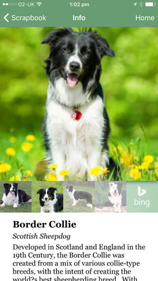 Canine Identification Apps