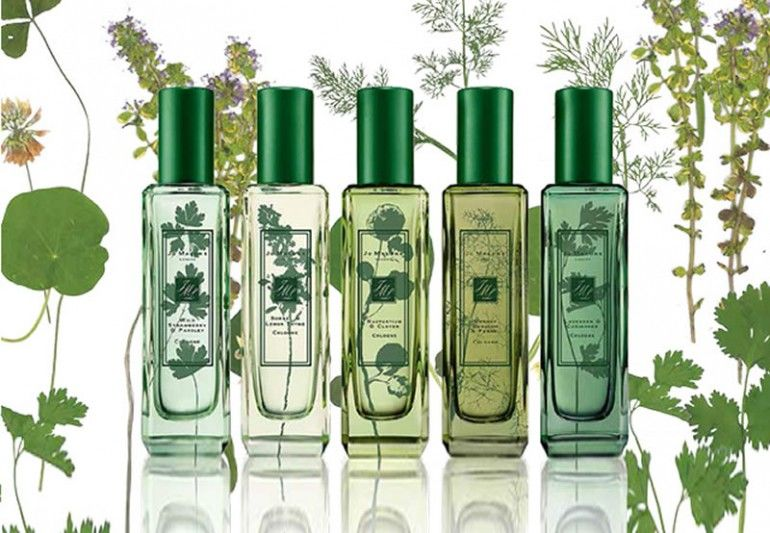 Herb-Inspired Fragrances