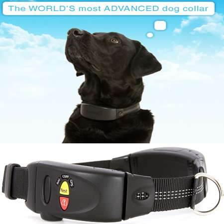 Retrieva Anti-Theft Dog Collar is a Labrador's LoJack