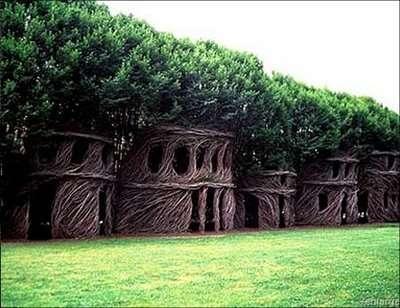 Organic Tree Shaping
