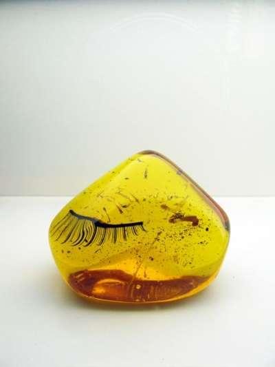Fossilized Fake Eyelashes
