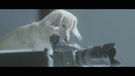 Canine Photographer Campaigns