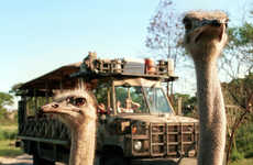 Sunset Safari Experiences - Disney's Animal Kingdom is Now Open After Dark