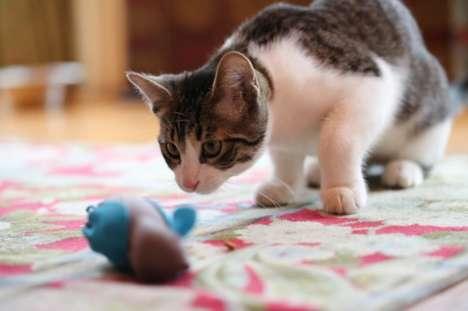 Bowl-Free Feline Feeders