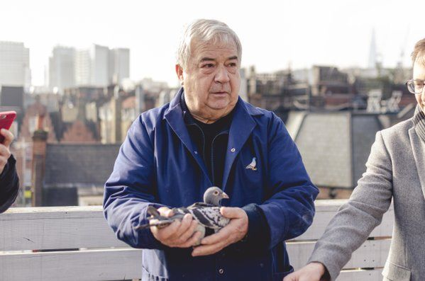 Pigeon Pollution Campaigns : monitor air pollution