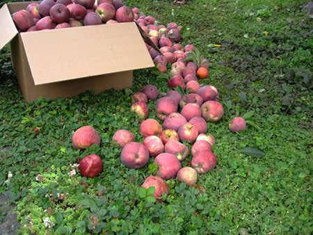 Voluntary Harvesting