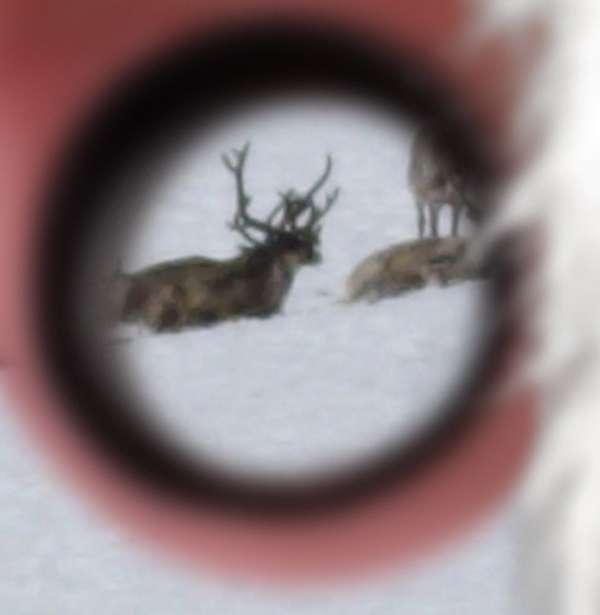 22 Deer and Reindeer-Inspired Innovations