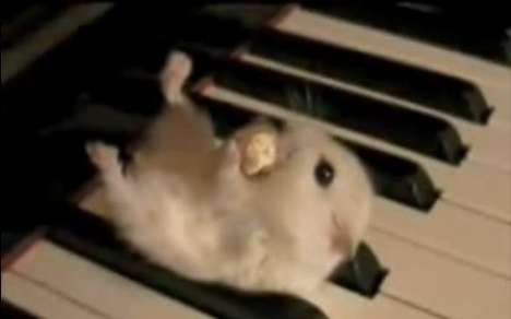 20 Amazing Animal Videos