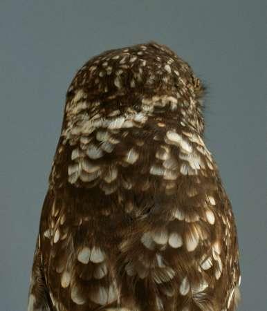 Unusual Birdtography