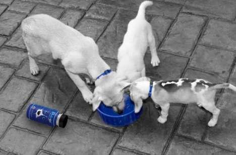 Ultra-Hydrating Dog Drinks
