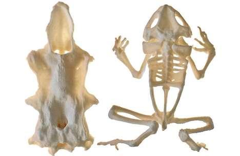 3D-Printable Skeleton Models