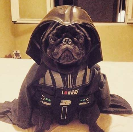 Galactic Dog Parades - These Pug Costumes Use Star Wars As Inspiration for This Unusual Dog Event