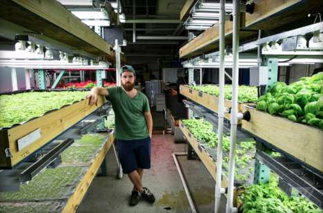 Tilapia Aquaponic Farms - Verticulture Grows Basil in a Way that May be the Future