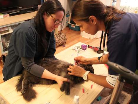On-Demand Veterinary Services