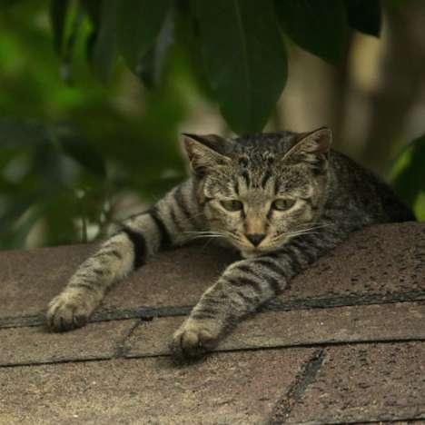 Stray Cat Photography