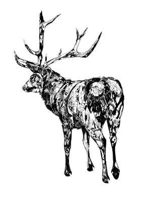 Animalistic Heritage Sketches