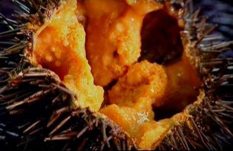 Sea Urchin Cuisine