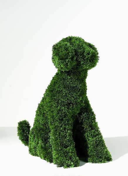 Plastic Grass Canines