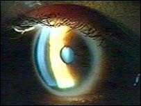 27 Bizarre Optical Innovations