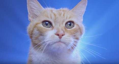 Cat-Centered Car Ads