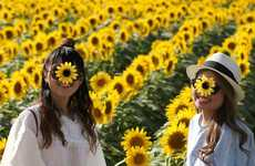Sunflower Festival Photography - Patrons Were Captured Exploring This Flower Farm's Colorful Fields