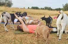 Zen Farmhouse Workouts - 'Goat Yoga' Combines Fitness, Animals and the Great Outdoors
