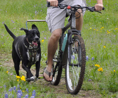 Cyclist Canine Leashes