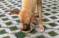 Edible DIY Dog Bowls - These Edible Dog Food Bowls Make Feeding Strays More Efficient