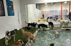 Urban Dog Resorts - Park9 is a Toronto Chain of Playcare Locations Built Specifically for Dogs