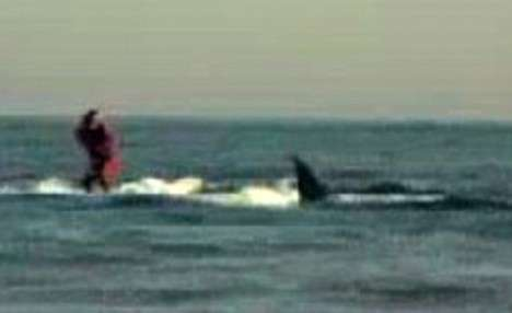Insanely Dangerous Extreme Sports - 25-Year-Old Invents Great White Shark Riding (UPDATE)