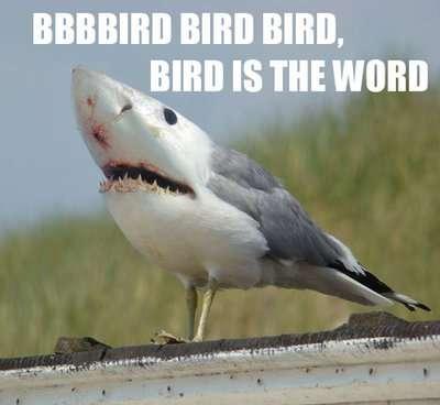 Bizarre Sharktography Memes