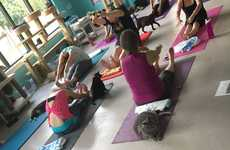 Feline Yoga Classes - 'Good Mews' Cat Shelter is Offering 'Yoga with Cats' Classes