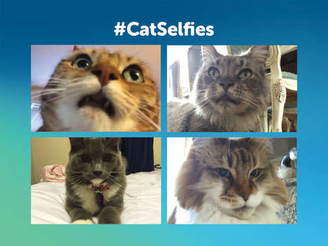 Feline Photography Apps - The 'Candid Catmera' App Helps Felines Take Their Own Cat Selfies