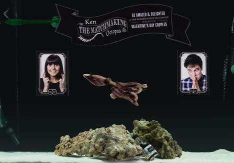 Cephalopod Matchmaker Campaigns