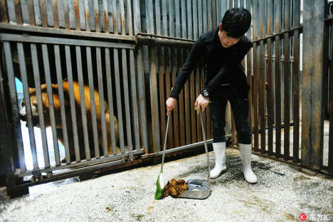Cage-Cleaning Animal Experiences - Guests Pay to Scoop Polar Bear Dung At Wuhan Haichang Ocean Park