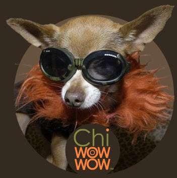 ChiWowWow Clothing for Designer Dogs Features Surfer Brands