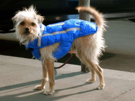 20 Questionably Stylish Pieces of Canine Couture