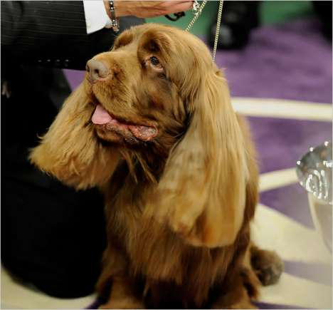 Senior Pet Beauty Pageants