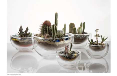 Micro Gardens as Living Art - Tiny Glass Terrariums by Paula Hayes