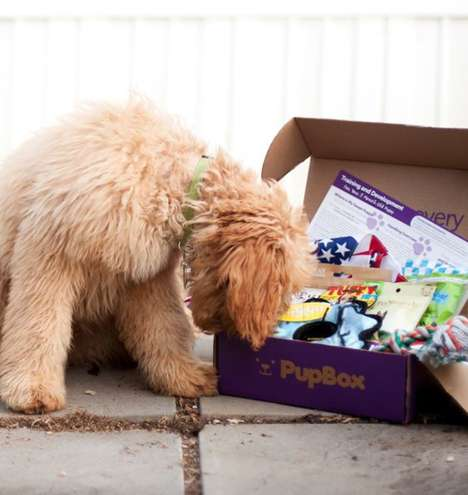 Puppy-Friendly Subscription Boxes - PupBox Comes With Treats, Training, and Toys for Growing Dogs