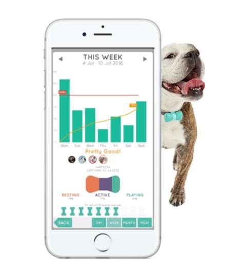 Bow-Shaped Pet Activity Trackers