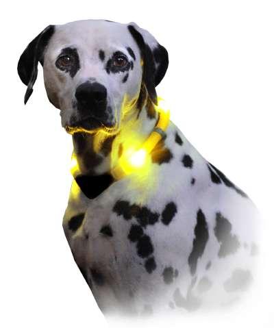LED Light Dog Collars