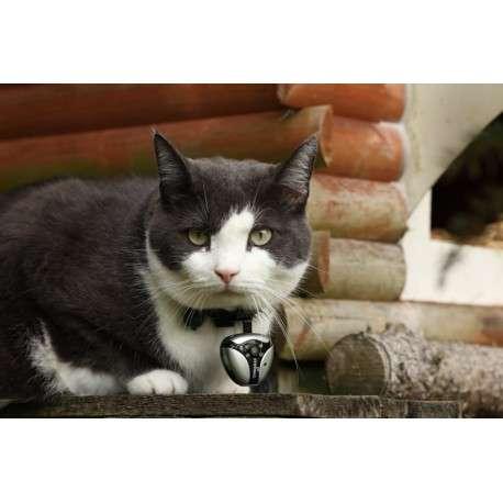 Cat Collar Cameras